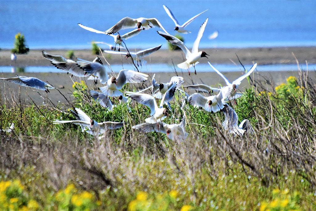 Leefruimte Vogels en Vissen Marker Wadden